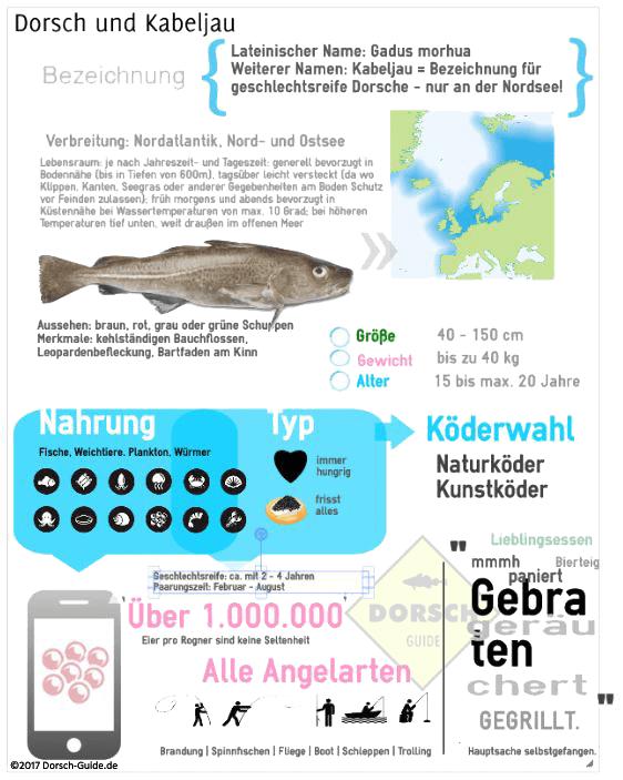 Infographik Tipps und Tricks zu Dorsch und Kabeljau