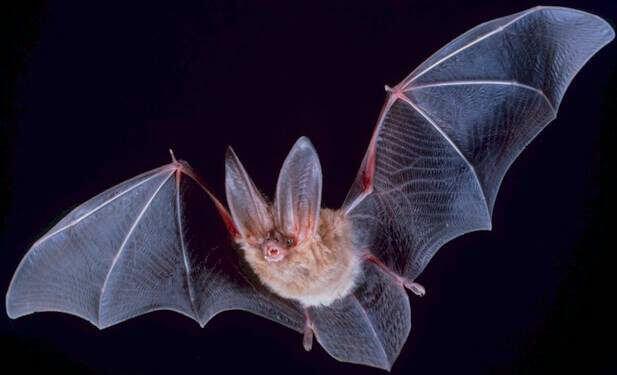 Manche Tiere und Insekten sehen gefährlich aus, sind aber harmloser als blutrünstige Stechmücken.