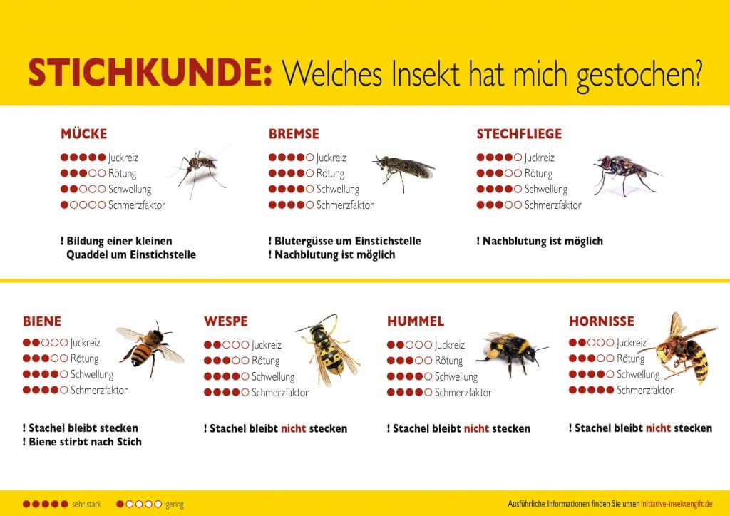 Die wichtigsten Insekten sind hier übersichtlich zusammen gestellt (Bild: Initiative Insektengift, https://www.initiative-insektengift.de/)
