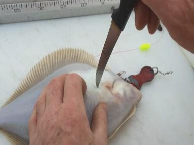 Auch bei Platten (Scholle, Kliesche, Butt, Flunder) wird der Herzstich angewendet. Du kannst Plattfische auch erlösen, indem Du  Kehle und die Wirbelsäule durchtrennst.