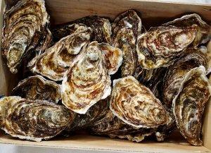 🛒 Austern<br>ℹ️ Online kaufen auf dorsch-guide.de