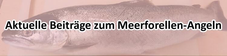 Meerforellen-angeln-Nachrichten-Fangmeldungen_und-Mefo-News.jpg