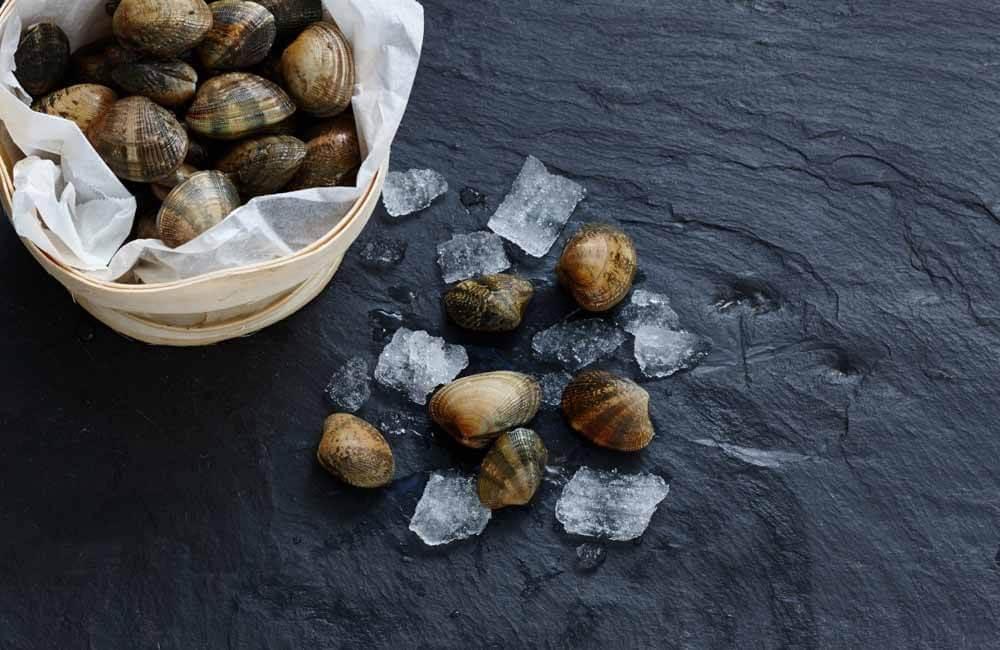 Venusmuscheln | Muscheln online bestellen auf dorsch-guide.de