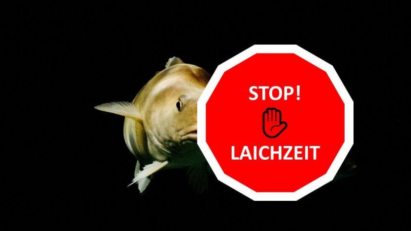 Beitragsbild_dorsch-guide.de_Dorsch-laichzeit_Dorsch-fangverbot-für-Angler-Fischer