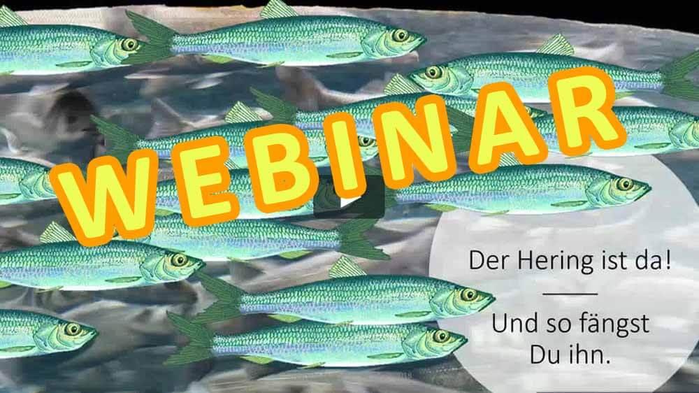 Heringsangeln_Webinar2_Einladung_Banner_dorsch-guide.de_Heringe-angeln