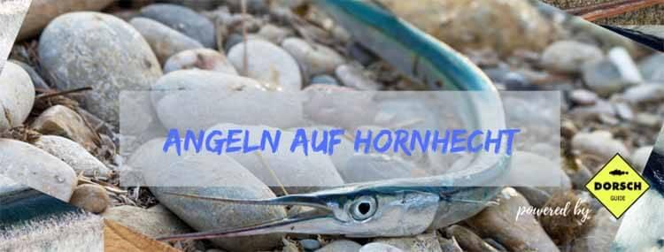 Hornhechtangeln-2020_dorsch-guide.de_Hornhecht-Silberpfeil-Hornfisch-Hornpiepen-fanen