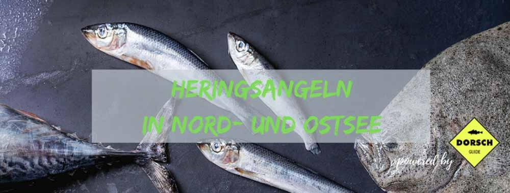 Heringsangeln-Ostsee_Hering-angeln-Ostsee-und-Nordsee_Dänemark-Holland-Polen-Norwegen_Dorsch-Guide.de